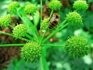bee-on-flower