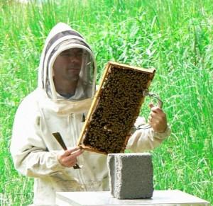backyard-beehive-team-james-wilkes